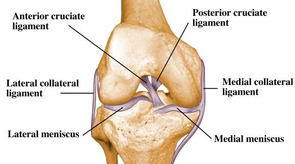 Posterior Cruciate Ligament Pcl Injury Total Physiocare